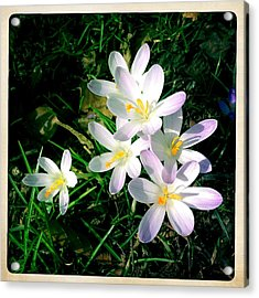 Lovely Flowers In Spring Acrylic Print by Matthias Hauser
