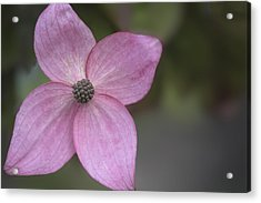 Pink Four Acrylic Print