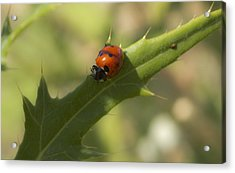 Lovely Lady Bug Acrylic Print by Shelly Gunderson
