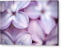 Lovely Lilacs Acrylic Print by Peggy Collins