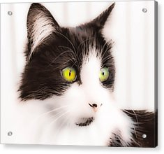 Lovely Little Kitten Acrylic Print by Naomi Burgess