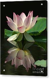 Lovely Lotus Reflection Acrylic Print by Sabrina L Ryan