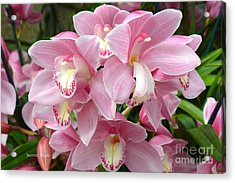 Acrylic Print featuring the photograph Cymbidium Pink Orchids by Jeannie Rhode