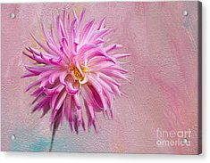 Lovely Pink Dahlia Acrylic Print