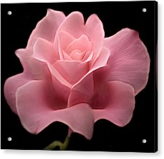 Acrylic Print featuring the digital art Lovely Pink Rose by Nina Bradica