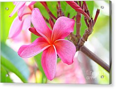 Acrylic Print featuring the photograph Lovely Plumeria by David Lawson