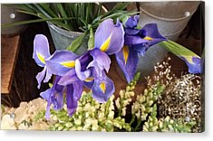 Lovely Purple Irises Acrylic Print