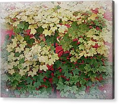 Lovely Red Brick Wall Acrylic Print by Philip White