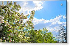 Lovely Spring Blossoms Acrylic Print