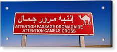 Low Angle View Of A Camel Crossing Acrylic Print by Panoramic Images