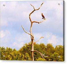 Low Angle View Of A Cormorant Acrylic Print