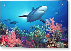 Low Angle View Of A Shark Swimming Acrylic Print