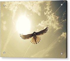 Low Angle View Of Eagle Flying Acrylic Print by David Hernandez / Eyeem