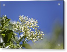 Low Angle View Of Flower Tree Acrylic Print by Paulien Tabak / EyeEm