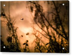 Low Angle View Of Silhouette Airplane And Trees Against Sky During Sunset Acrylic Print by Andres Ruffo / EyeEm