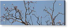 Low Angle View Of Southern Carmine Acrylic Print by Panoramic Images