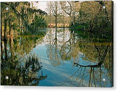 Low Country Swamp Acrylic Print