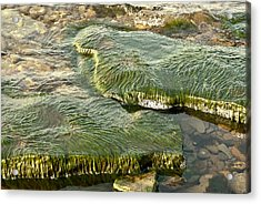 Acrylic Print featuring the photograph Low Water Algae by Lena Wilhite