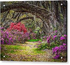 Lowcountry Spring Acrylic Print by Steve DuPree
