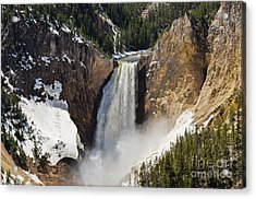 Lower Falls Of The Yellowstone Acrylic Print