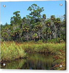 Lower Suwannee Refuge 2a Acrylic Print
