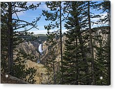Lower Yellowstone Canyon Falls - Yellowstone National Park Wyoming Acrylic Print by Brian Harig