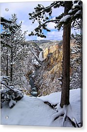 Lower Yellowstone Falls In October Acrylic Print by Robert Woodward