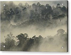 Lowland Primary Forest At Sunrise Acrylic Print