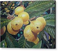 Lowquats 2 Acrylic Print by Hilda and Jose Garrancho