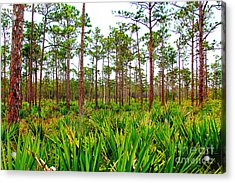 Loxahatchee Acrylic Print by Carey Chen