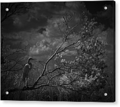 Loxahatchee Heron At Sunset Acrylic Print