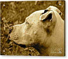 Loyalty And Strength Acrylic Print by Q's House of Art ArtandFinePhotography
