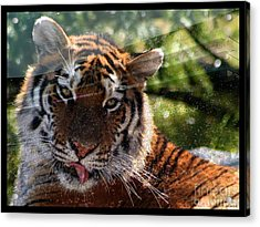 Lsu - Sorry Was That Your Quarterback? Acrylic Print