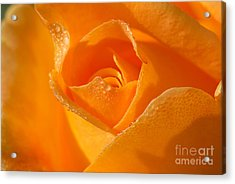 Lucille's Rose Acrylic Print