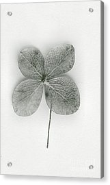 Luck Acrylic Print