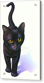 Lucky Cat Acrylic Print by Andrew Farley