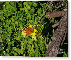 Lucky Acrylic Print by Drew Shourd