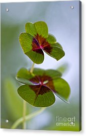 Lucky Lovers Acrylic Print by Maria Ismanah Schulze-Vorberg