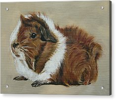 Lucky The Cutest Guinea Pig Acrylic Print by Lyndsey Hatchwell