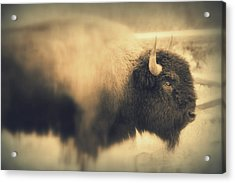 Acrylic Print featuring the photograph Lucky Yellowstone Buffalo by Lynn Sprowl