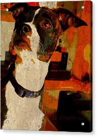 Lucy 7 Acrylic Print by Tg Devore