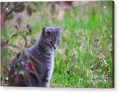 Lulu In The Leaves Acrylic Print by Donna Munro