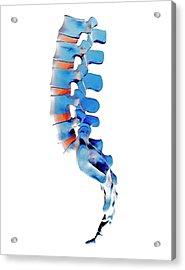 Lumbar Spine And Sacrum Acrylic Print