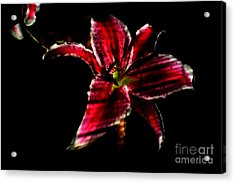Acrylic Print featuring the photograph Luminet Darkness by Jessica Shelton