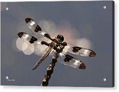 Luminous Dragonfly Acrylic Print by Christina Rollo