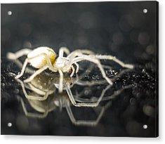 Luminous Spider Acrylic Print by Carl Engman