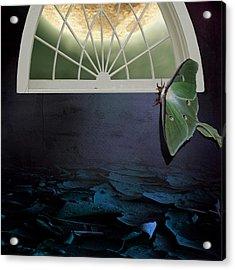 Luna Acrylic Print by Sandra Pearsall