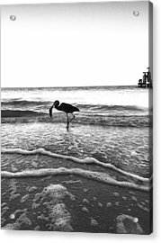 Acrylic Print featuring the photograph Lunch At The Pier by Jean Marie Maggi