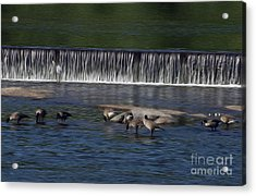 Acrylic Print featuring the digital art Lunch On The James by Kelvin Booker