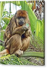 Lunch Time - Santa Ana Zoo Acrylic Print
